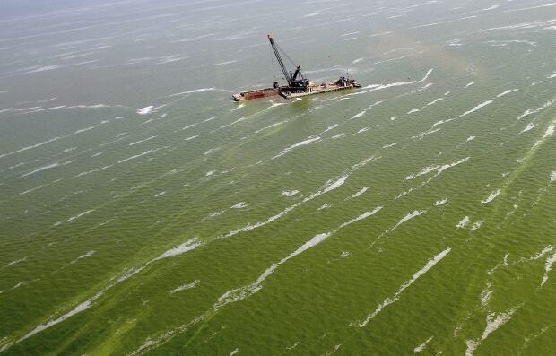 Lake Erie Algae Water