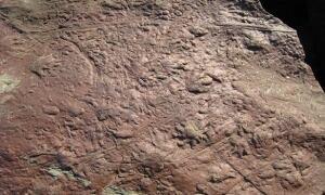 100730-reptile-tracks-584px