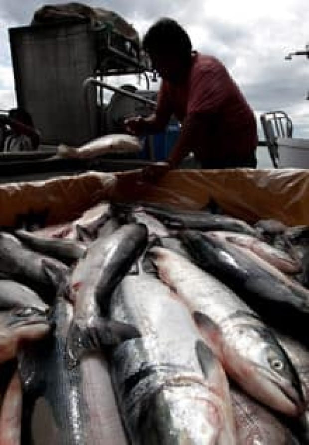 salmon-catch-cp-9268333-220x316