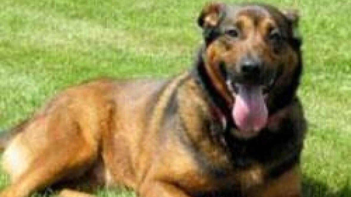 Aggressive Dog Training Saskatoon