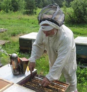 nb-hachey-bees