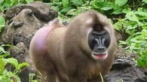 tp-siv-monkey100916