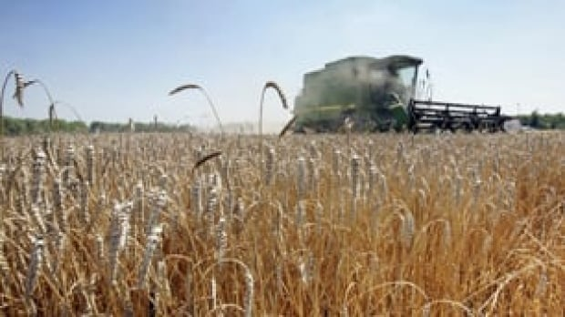 tp-wheat-harvest-cp-5187620