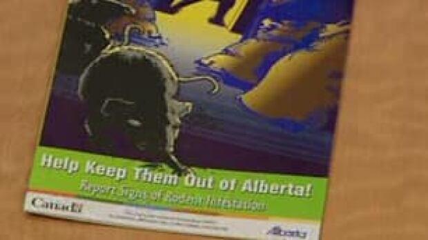 tp-cgy-rat-poster