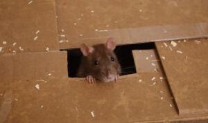 rats-cp-w-8321558