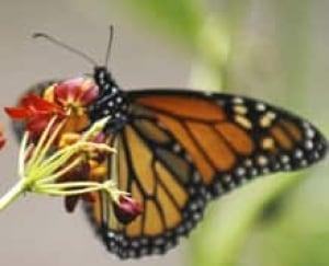 monarch-cp-3491549