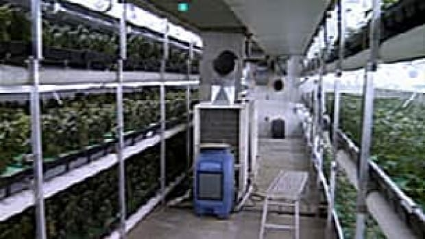 Massive Underground Grow Op Busted In Chilliwack Cbc News