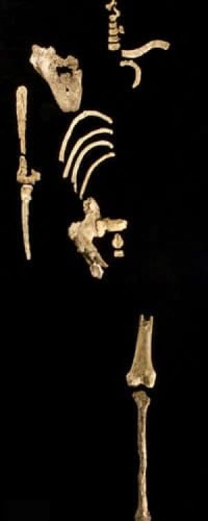 fossil-skeleton