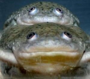 tech-frog-weed-killer