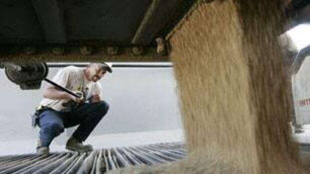 unloading-wheat2