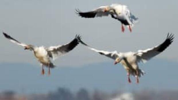 tp-bird-cp-w6223812