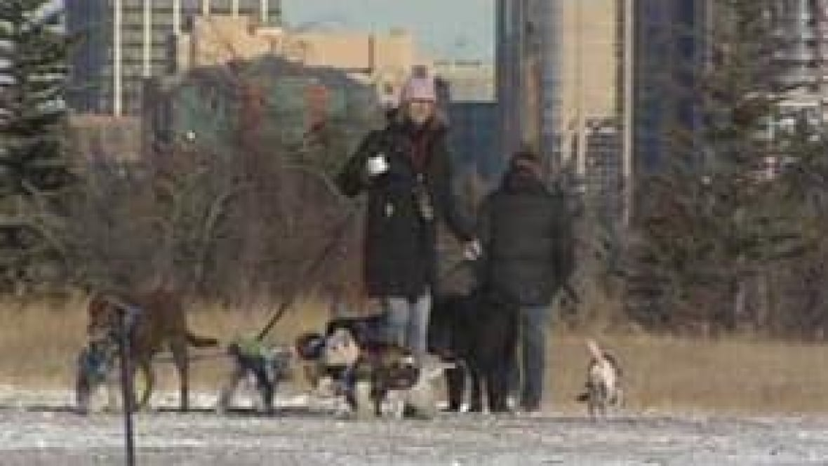 how to become a dog walker in calgary