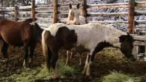 tp-yukon-wild-horses100929