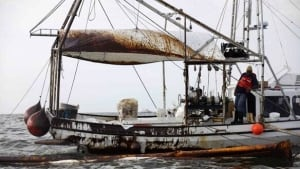 w-gulf-boat-cp-8801564