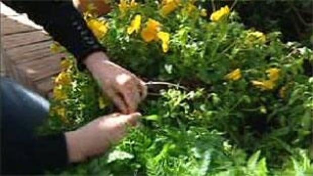 tp-ott-horticulture-algonqu