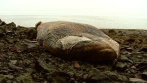ns-dead-whale