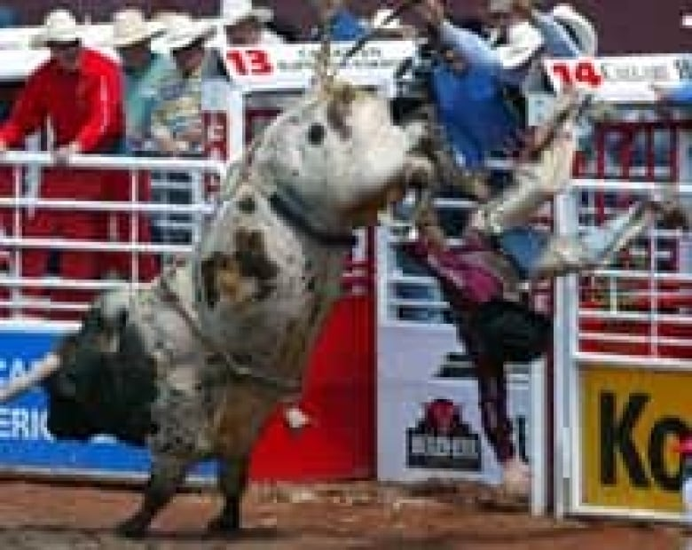 Outlaw Leaps Out Of The Rodeo Chutes With Steven Turner Of