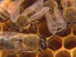 bees071226