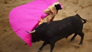 w-bullfight-cp-9111061