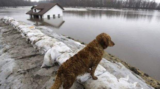 flood-dog-cp-w6458861