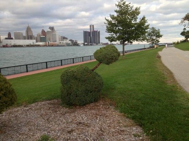 Phallic bush fixed
