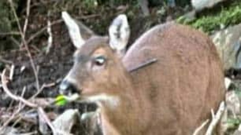 Officers Hope To Find This Doe And At Least One Other Also