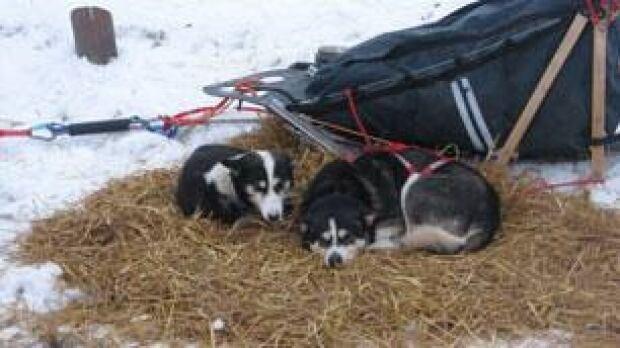mb-musher-trek-facebook