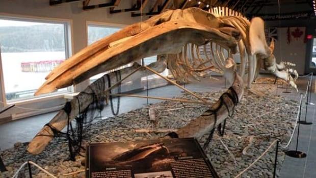 nl-humpback-skeleton1