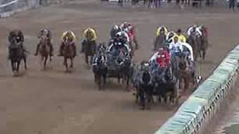Six Horses Have Died At The Calgary Stampede Four Of