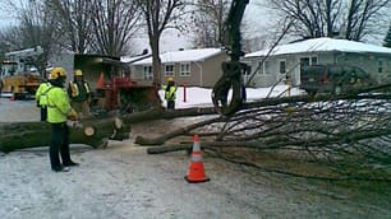 Ash borer infestation forces city to cut trees | CBC News