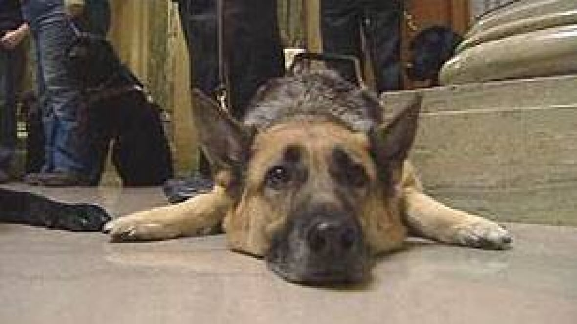 Number Of Service Dogs In Saskatchewan