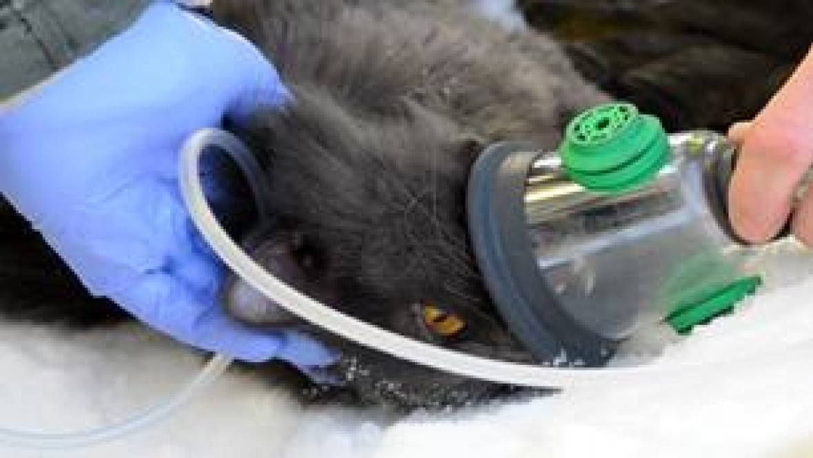 Hiss of oxygen saves puss from peril - Manitoba - CBC News