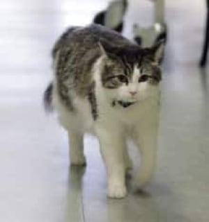 oscar-cat-cp-3346552