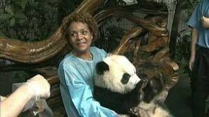 tp-jean-michaelle-panda-china