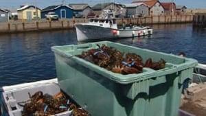 pe-tp-lobster-landing