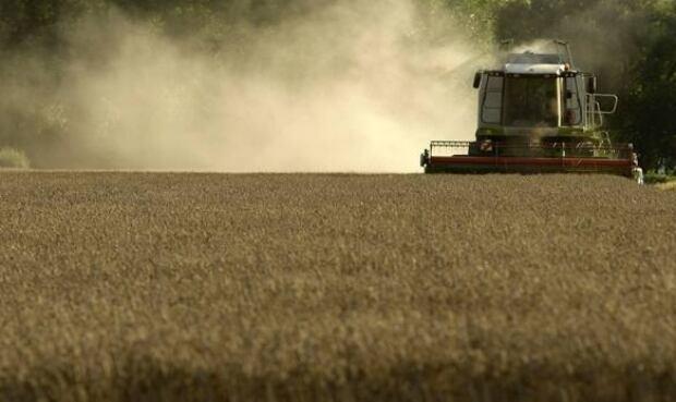 wheat-field-rtr266i7