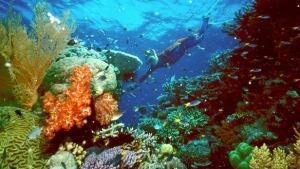 tp-coral-barrier-cp-RTROQYG