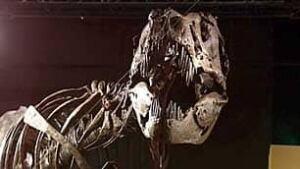 bc-090107-dinosaur-bones1
