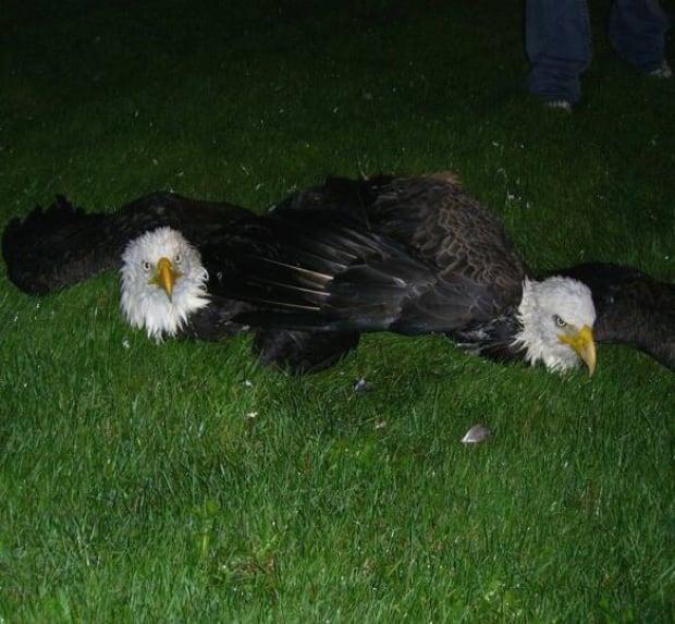 pe-584-eagles-locked