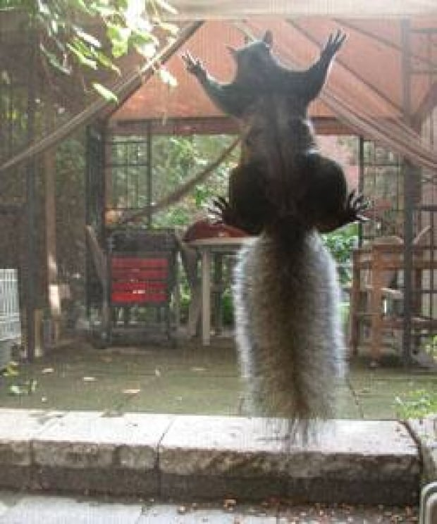 squirrel-didier-combatalade-1911