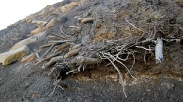 tp-mummifiedforest