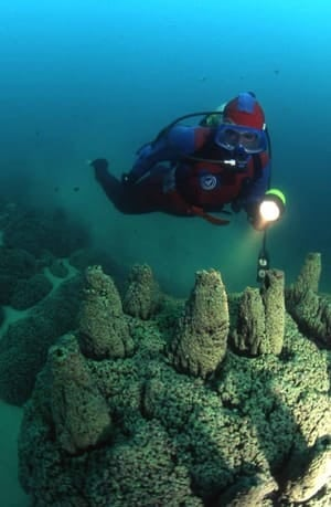 100706-diver-microbialites-300px