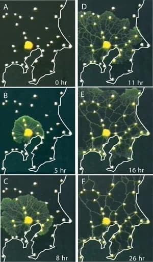 tokyo-slime-mold-2