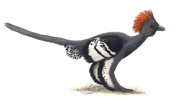 dinosaur-feathers-colour