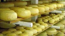 Gort's Gouda - cheese room