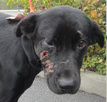 Ottawa dog attack breezy 1 (Oct. 21)