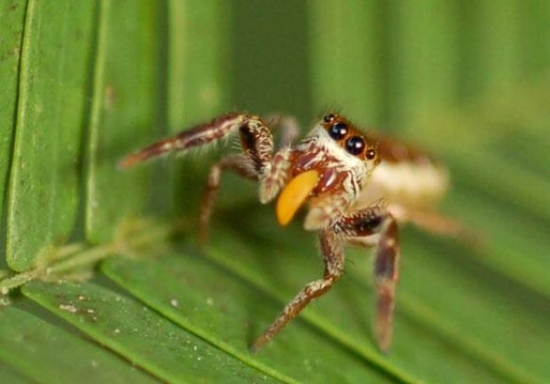 spider-vegetarian