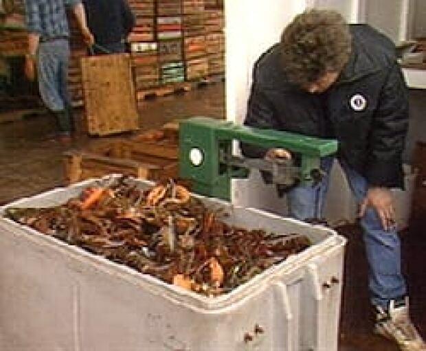 pe-lobsterweigh