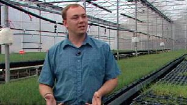 cgy-fescue-greenhouse