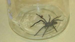 full-spider